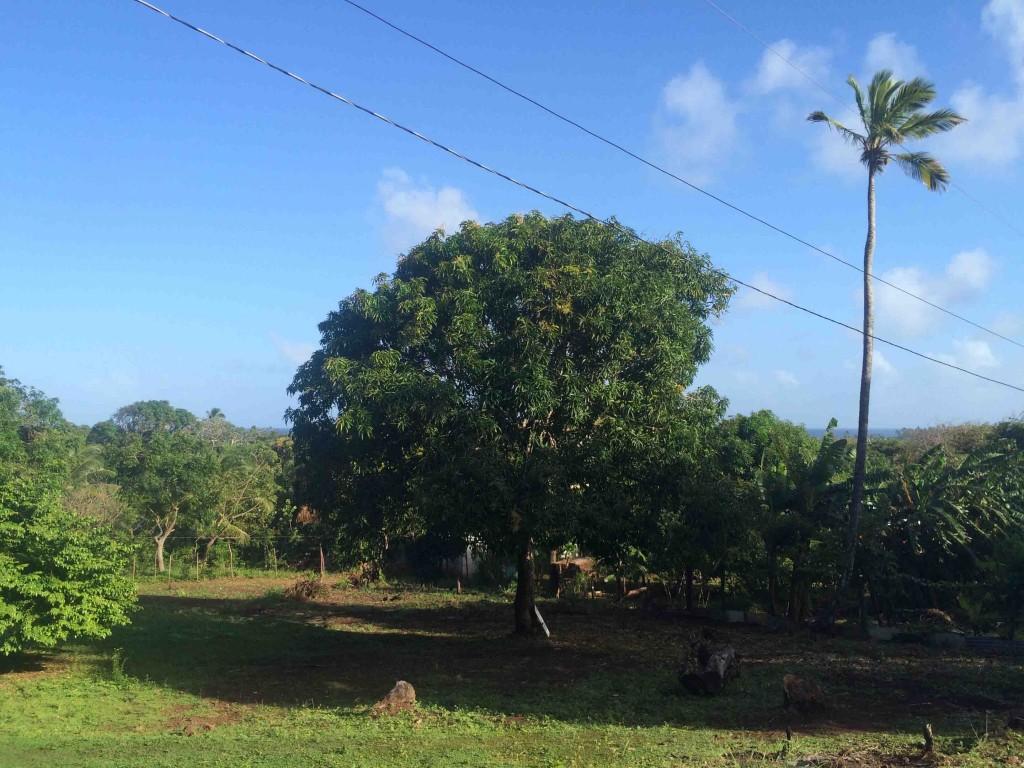 land_forsale_little_corn_island